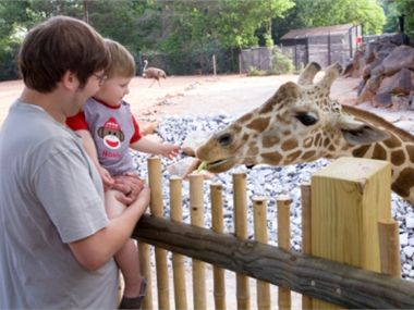 Giraffe feeding on Twiga Terrace